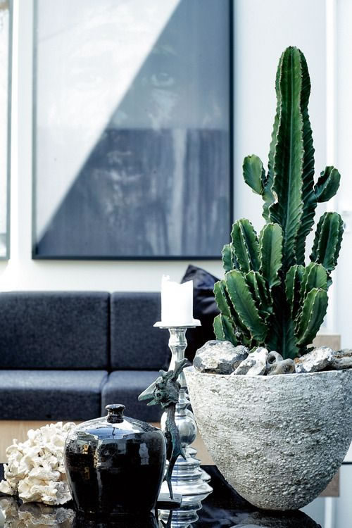 DECORACION CACTUS 5 INTERIORISMO WWW.DECHARCOENCHARCO.COM