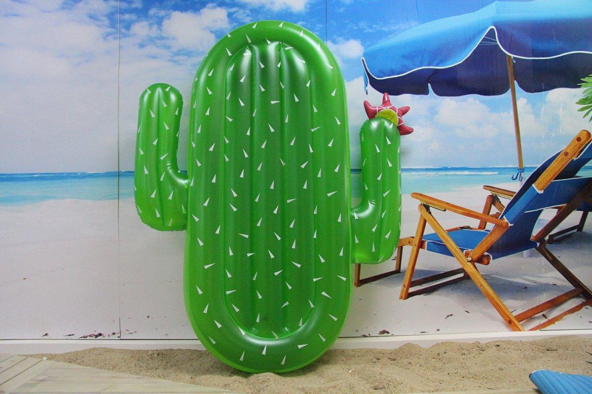 cactus colchoneta